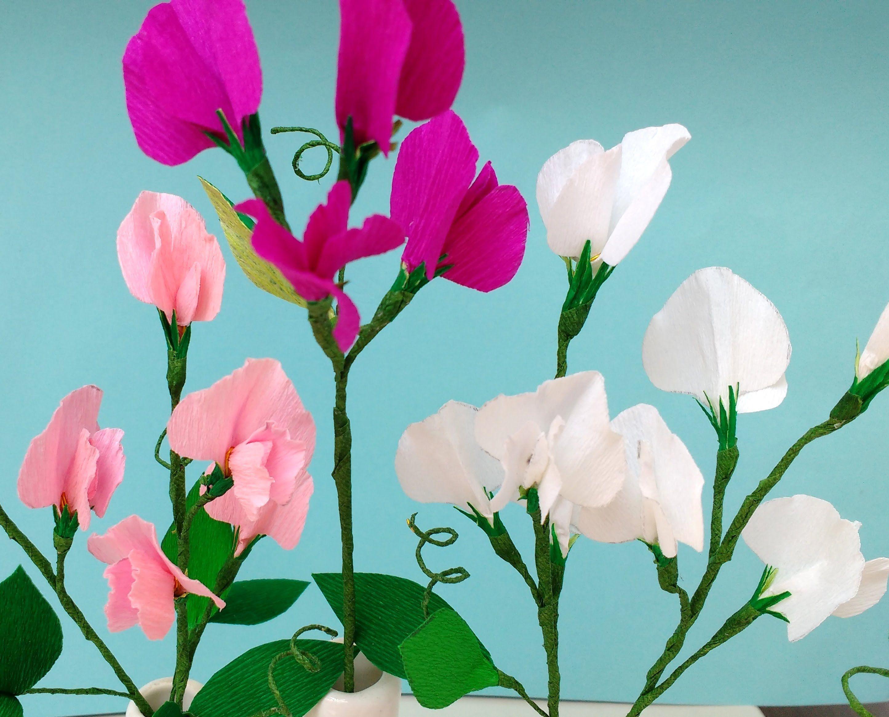 Paper Flowers Sweet Pea Cositas Pinterest Flowers Flower And
