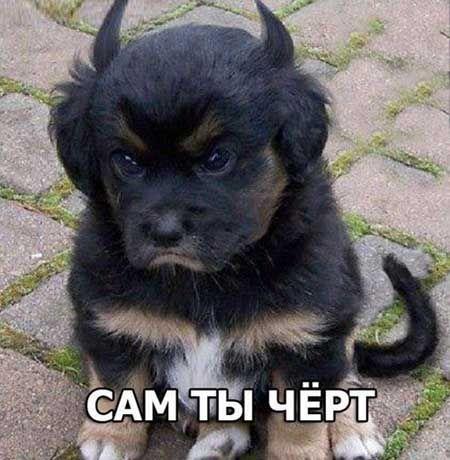 Фото с надписями | Смешные фото собак, Фотографии собак и ...