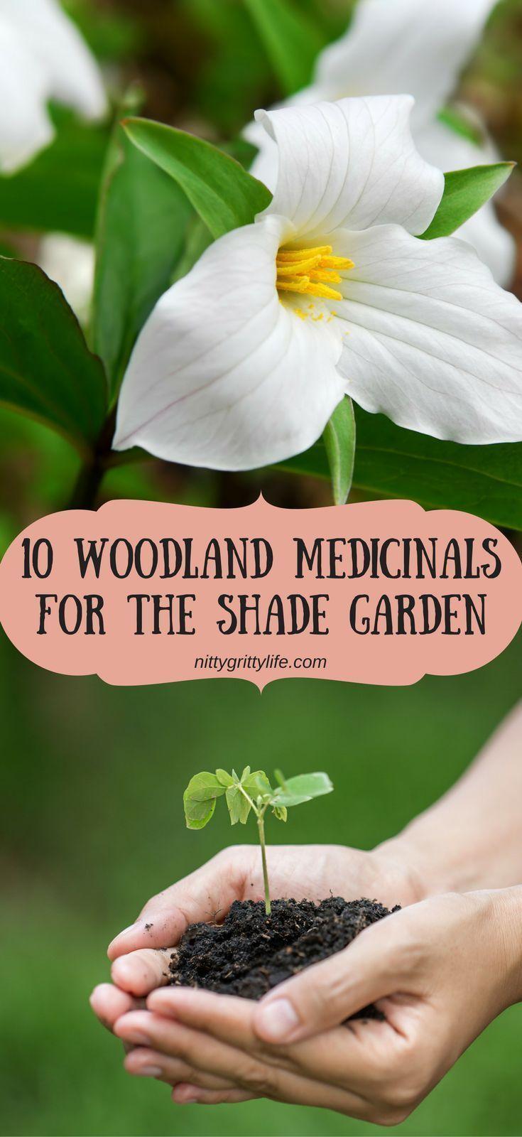 Holistic Landscaping: 10 Woodland Medicinals for the Shade Garden-#Garden
