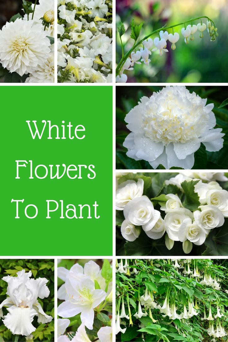 30 White Flowers To Plant In Your Garden White flowering