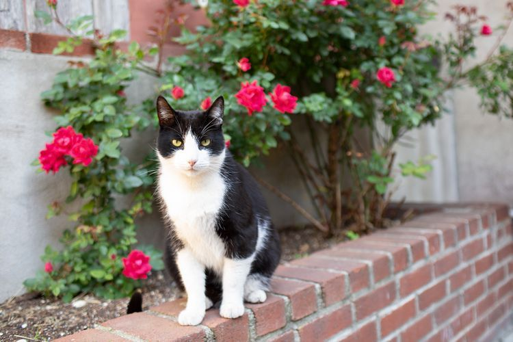 Ways to Keep Cats Out of Your Yard or Garden in 2020 | Cat ...