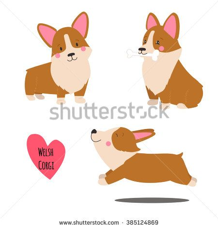 Cute welsh corgi set in different poses. Funny corgi vector illustration. Portrait of a dog for decoration and design - stock vector