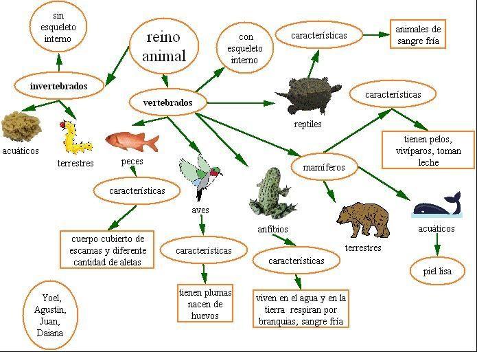 vertebrados e invertebrados | CIENCIAS NATURALES | Pinterest ...