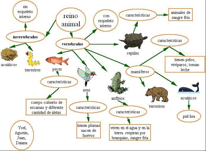 Animales vertebrado e invertebrados para colorear - Imagui | tareas ...