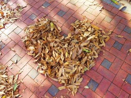 love . Fallen leaves