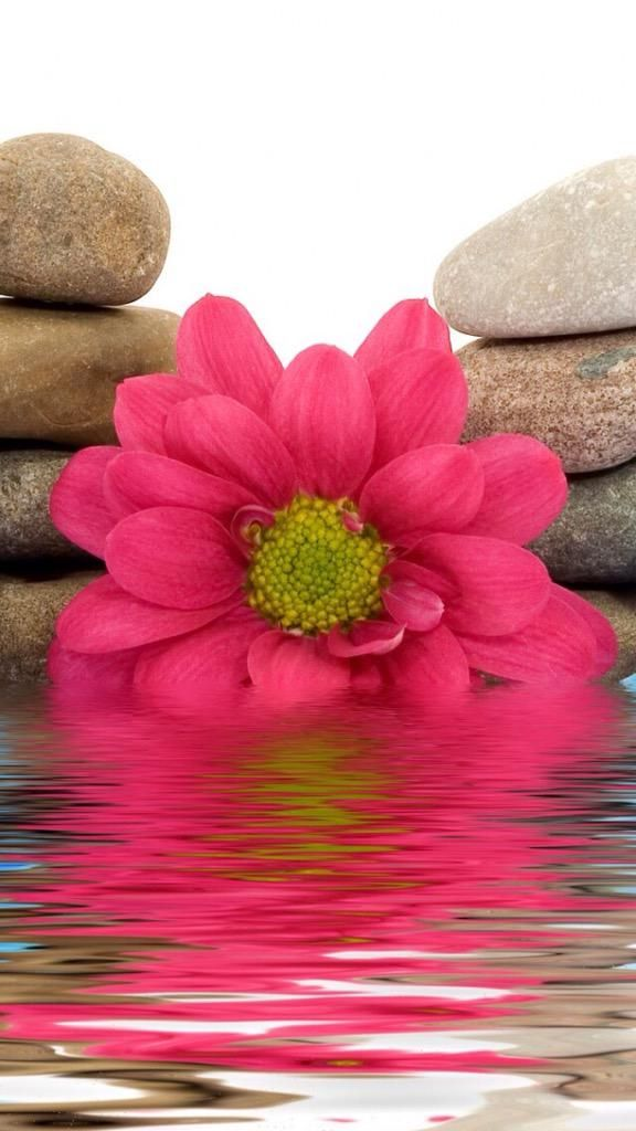 Flower reflection in the water.
