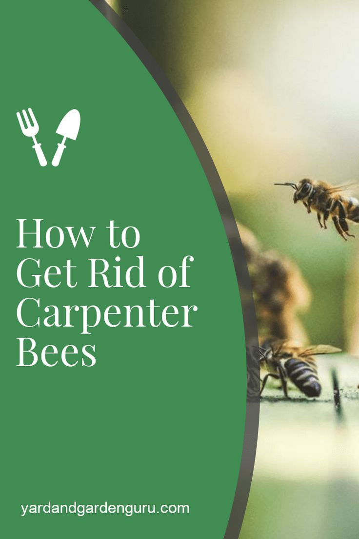 Getting rid of carpenter bees the right way in 2020