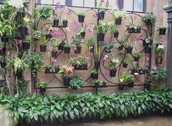 Pin About Hanging Orchid Orchids Garden And Orchid