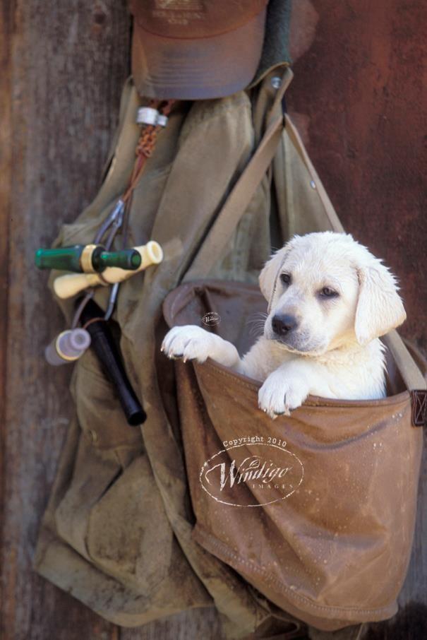 Little cutie, growing up duck hunter