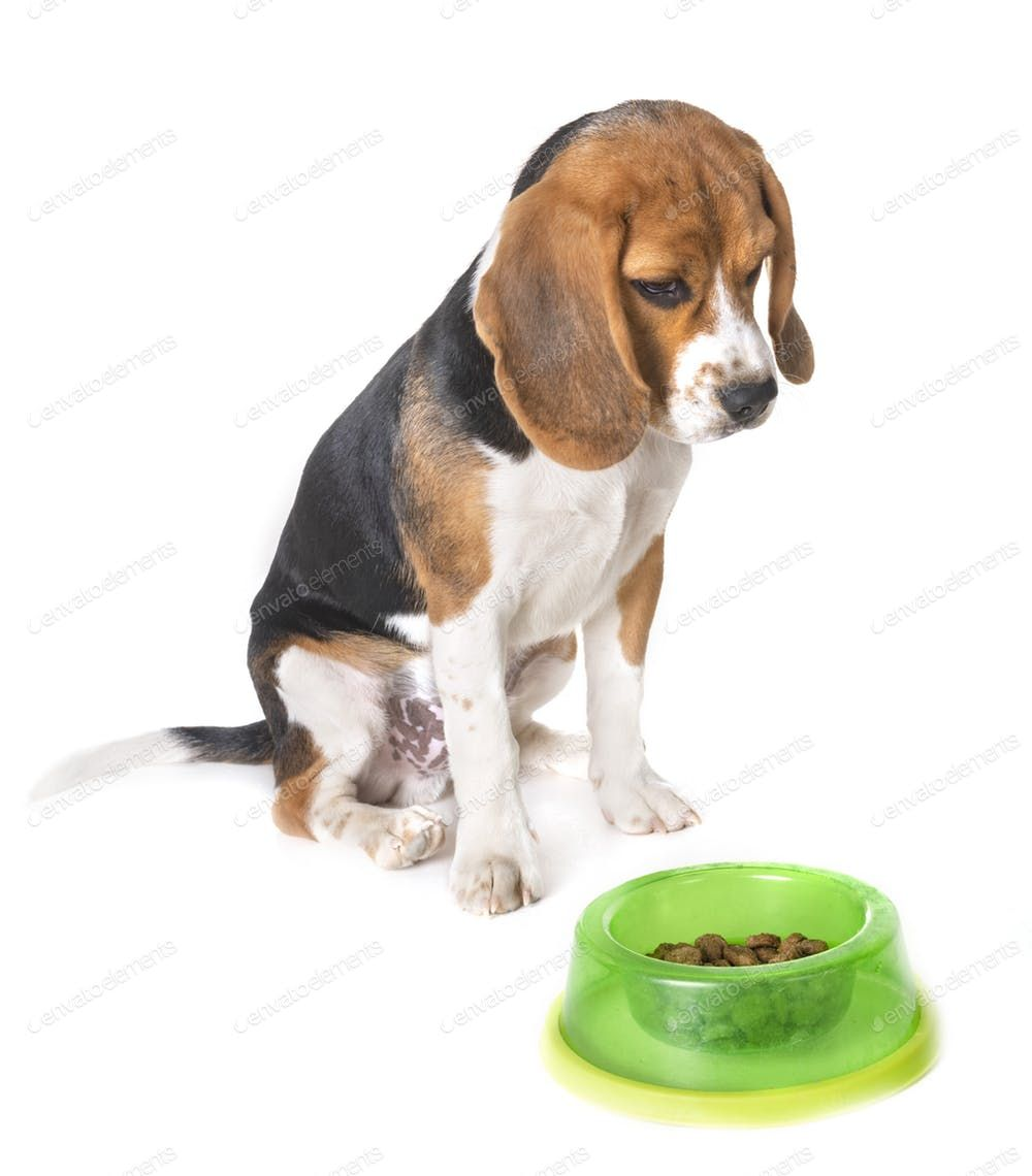 Puppy Beagle Eating By Cynoclub S Photos Ad Sponsored Puppy