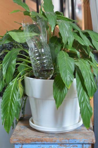 plantes en pot 10 solutions pour r duire l 39 arrosage. Black Bedroom Furniture Sets. Home Design Ideas