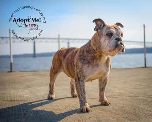 Adopt Maude On Dog Sounds Animal Snacks Dogs