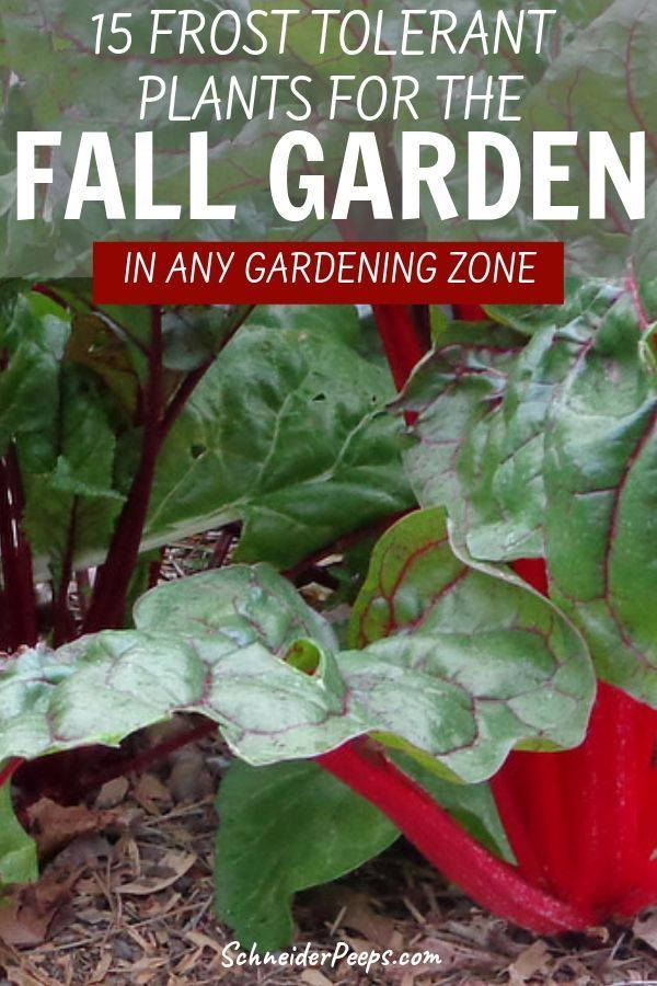 15 frost tolerant plants for the fall and winter vegetable garden