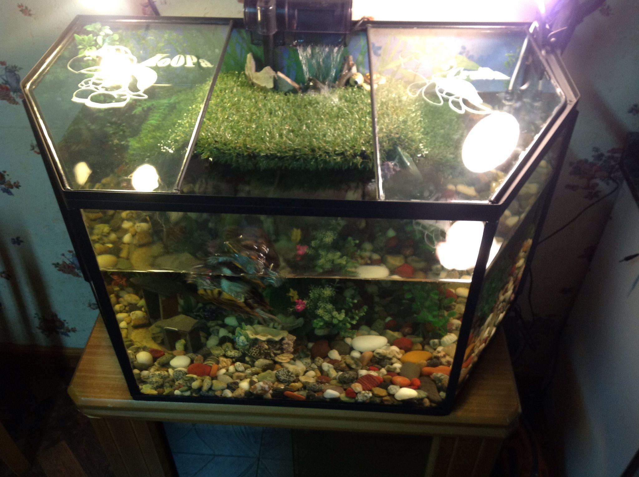 Tortuguera peceras pinterest peceras y tortugas for Peceras para tortugas