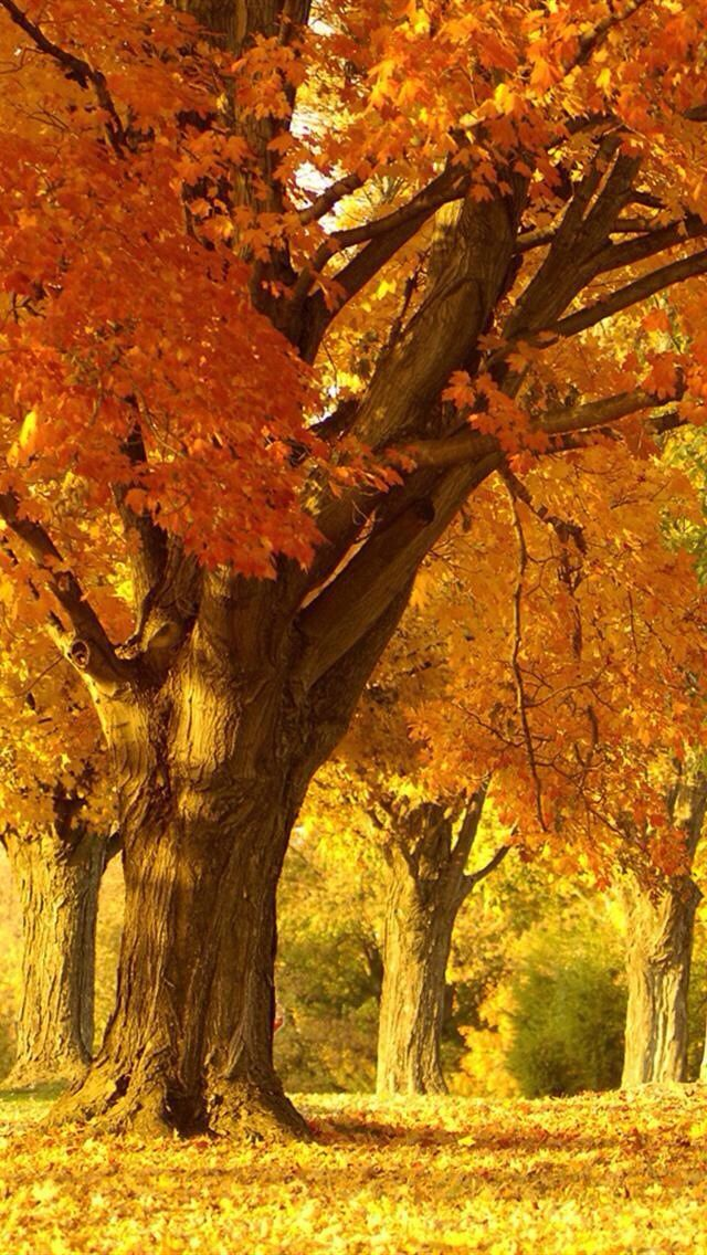 iPhone 5 Nature Wallpaper Árvores de outono, Paisagens