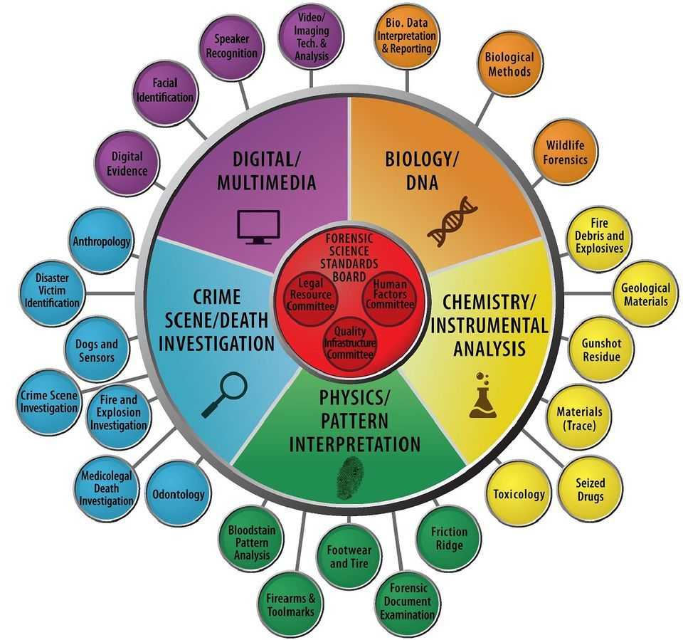 Org Chart Feb  Osac  Law Forensics    Forensics