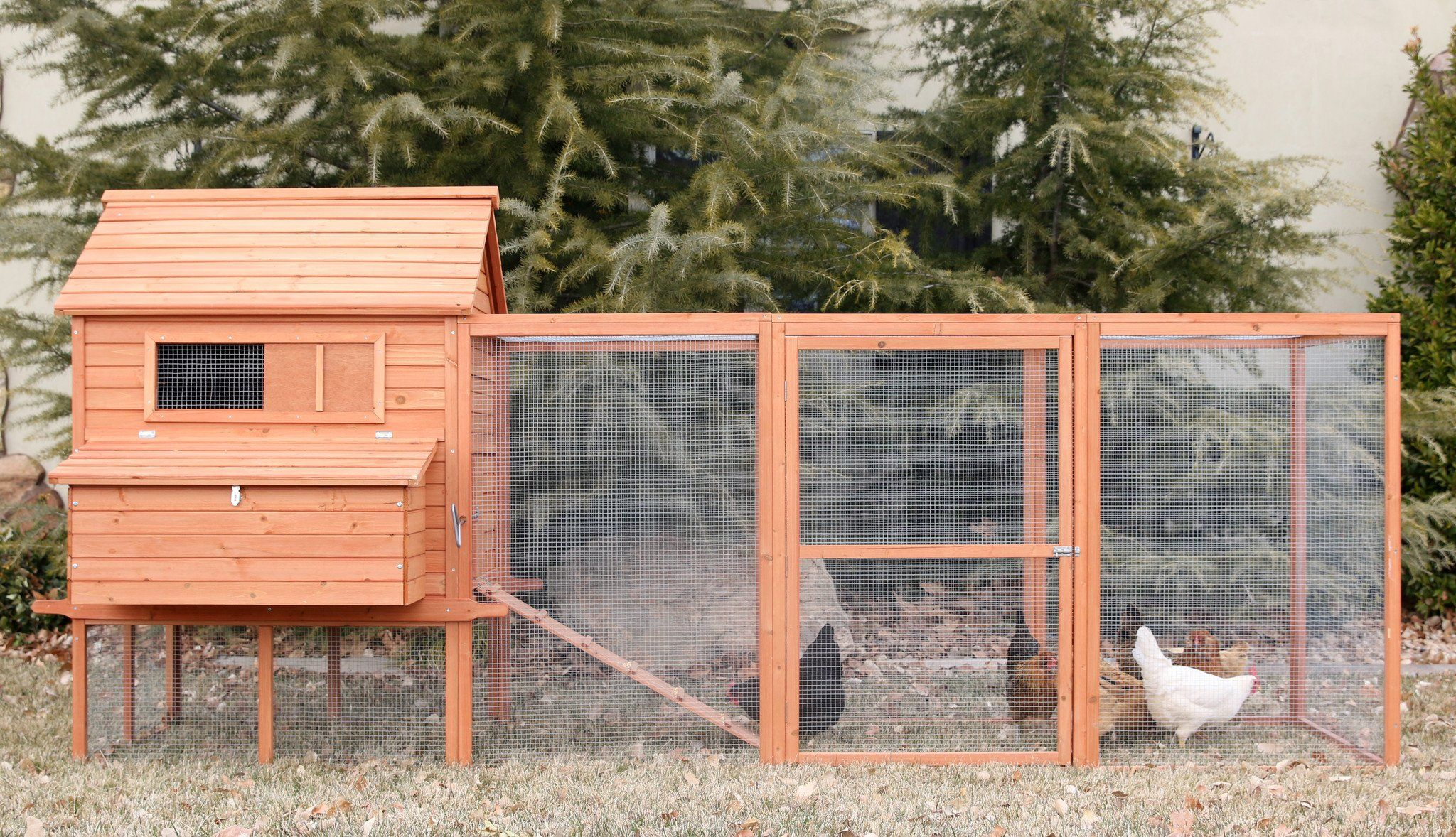 The Rhode Island Homestead 10 15 Chickens Wire Mesh Coops And Wiring