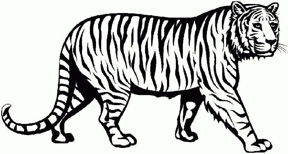 Tiger Clipart Black And White Elegant Of Cute Tiger Clipart Black And White Letter Master Clip Art For Students Hatenylo Com Tiger Illustration Art Clip Art