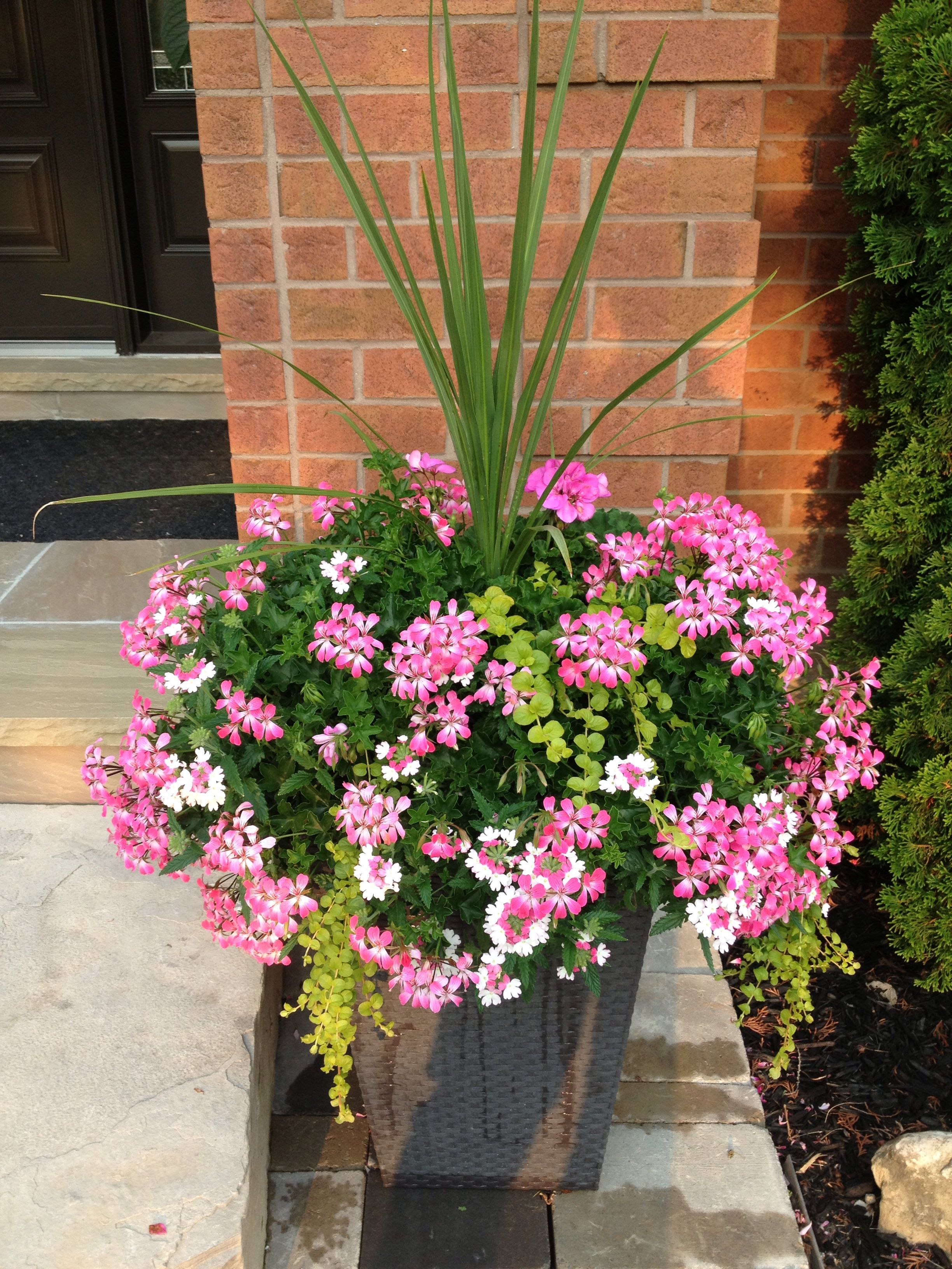 My Flower Pots Summer Of 2014 From Costco Plants I Love 400 x 300
