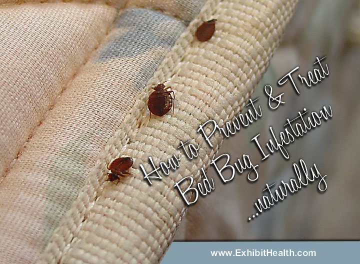 Tips on How to Prevent and Treat Bed Bug Infestation