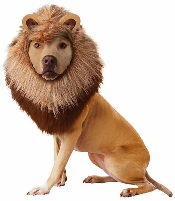 Lion Dog Costume - X-Small|EntirelyPets