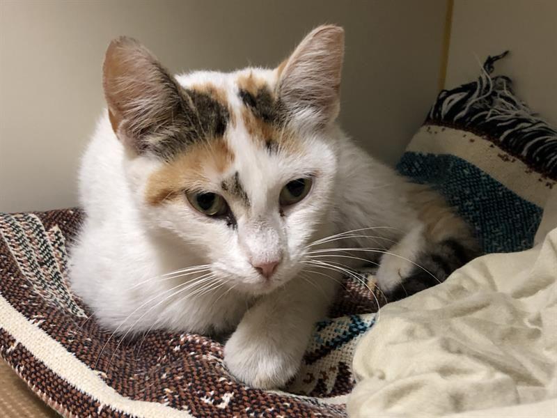 Adopt PUDGE on Animal rescue league, Pet adoption
