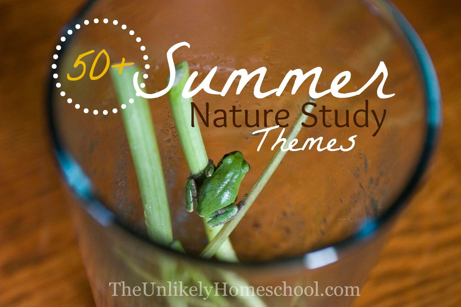 50+ Summer Nature Themes {The Unlikely Homeschool}