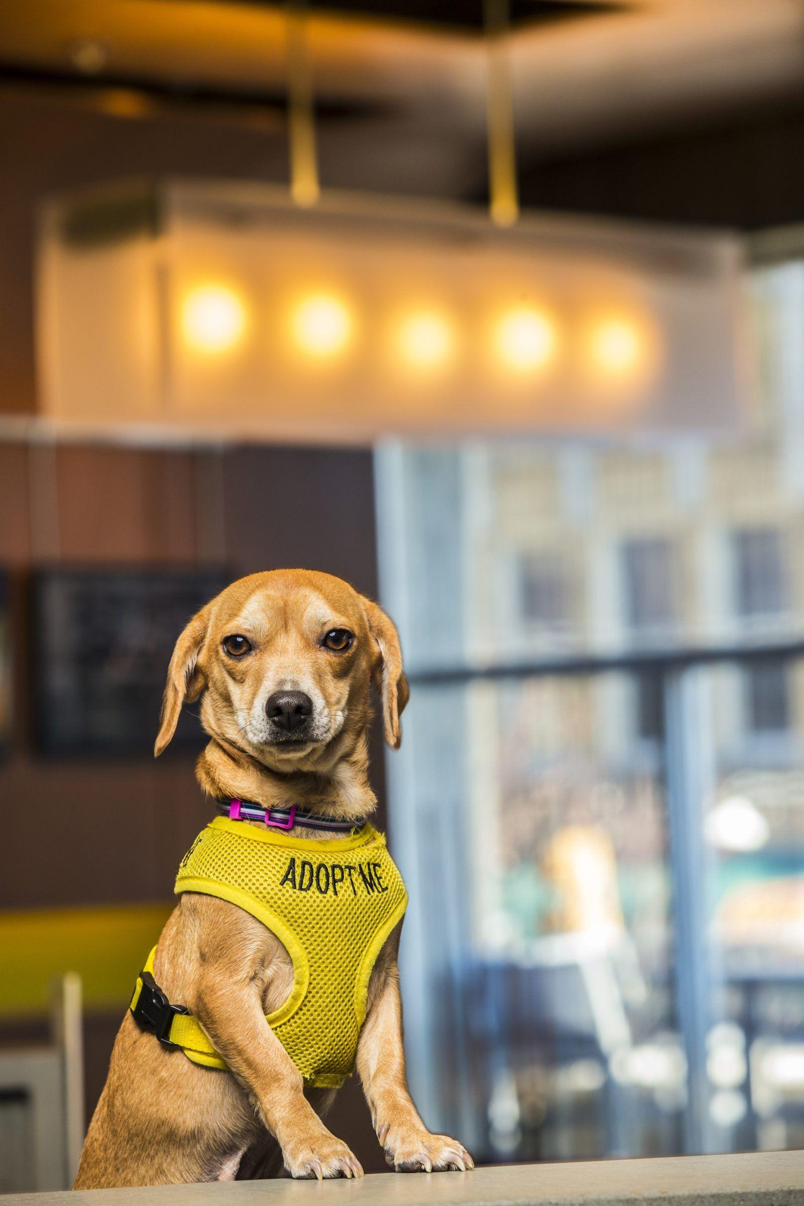 How A Hotel In Asheville Helps Rescue Dogs Garden Gun