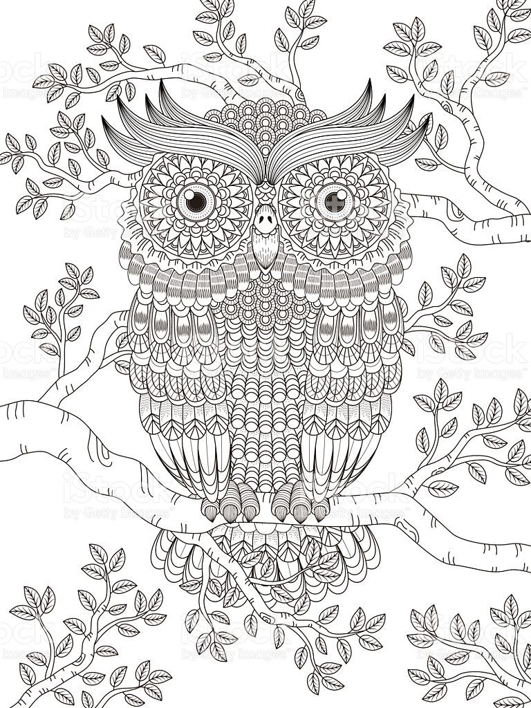Adult Coloring Page With Gorgeous Owl Royalty Free Stock Vector Art