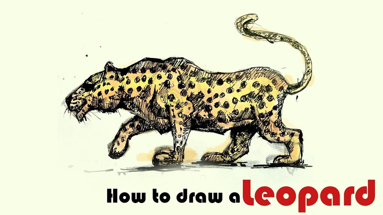 Wild animal drawing how to draw a leopard leopard rapid sketch