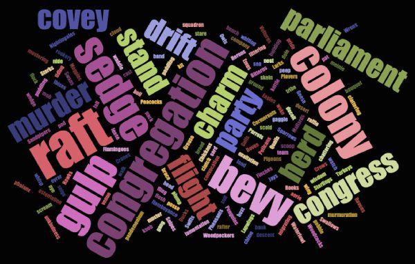 Names for Groups of Birds   Collective nouns, Homeschool ...