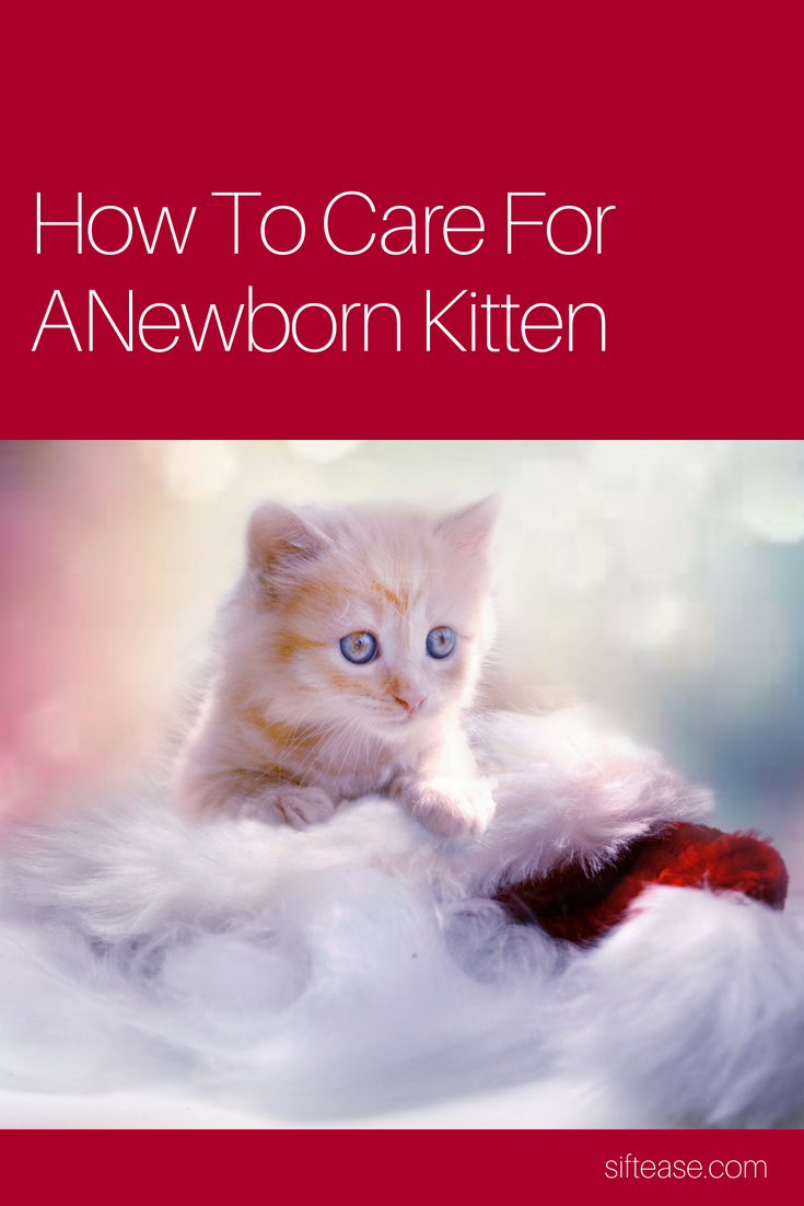 How To Care For A Newborn Kitten Newborn Kittens Kittens Kitten Care