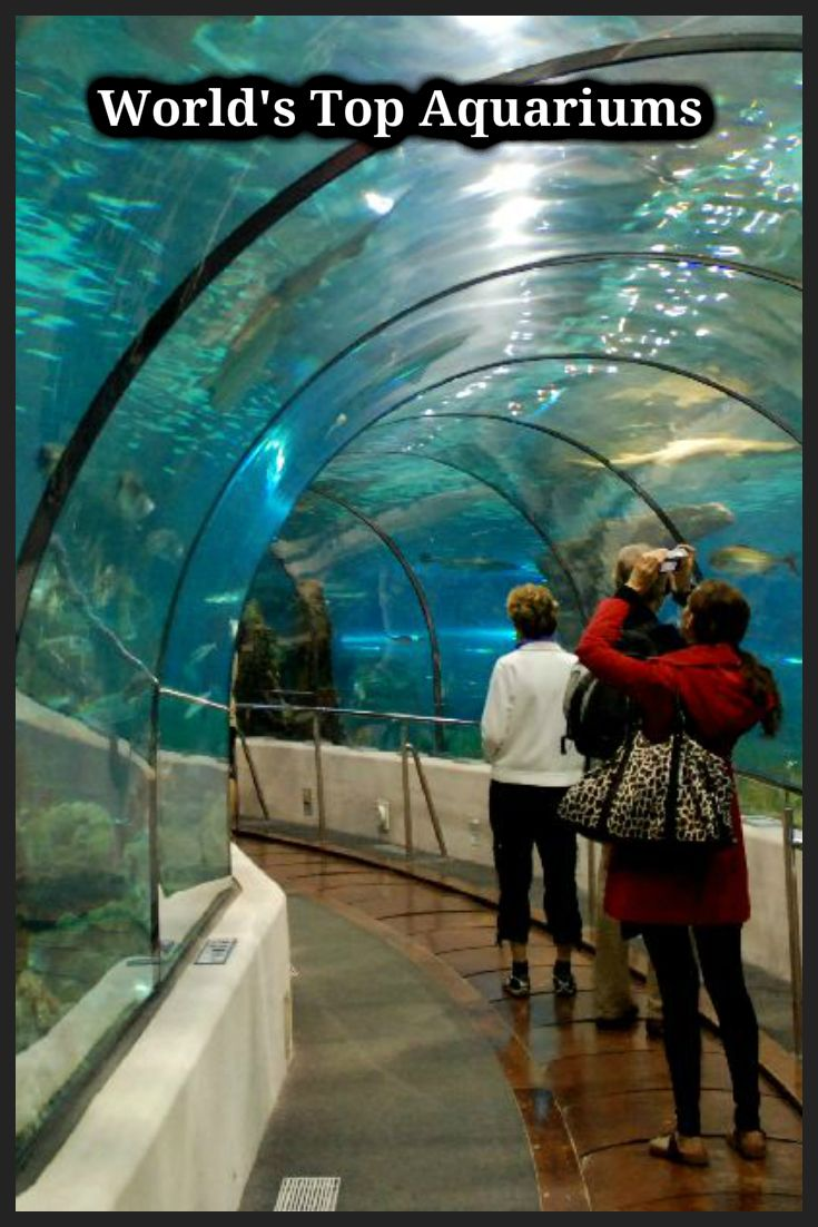The 5 Best Aquariums in the World - Posts in 2020 ...