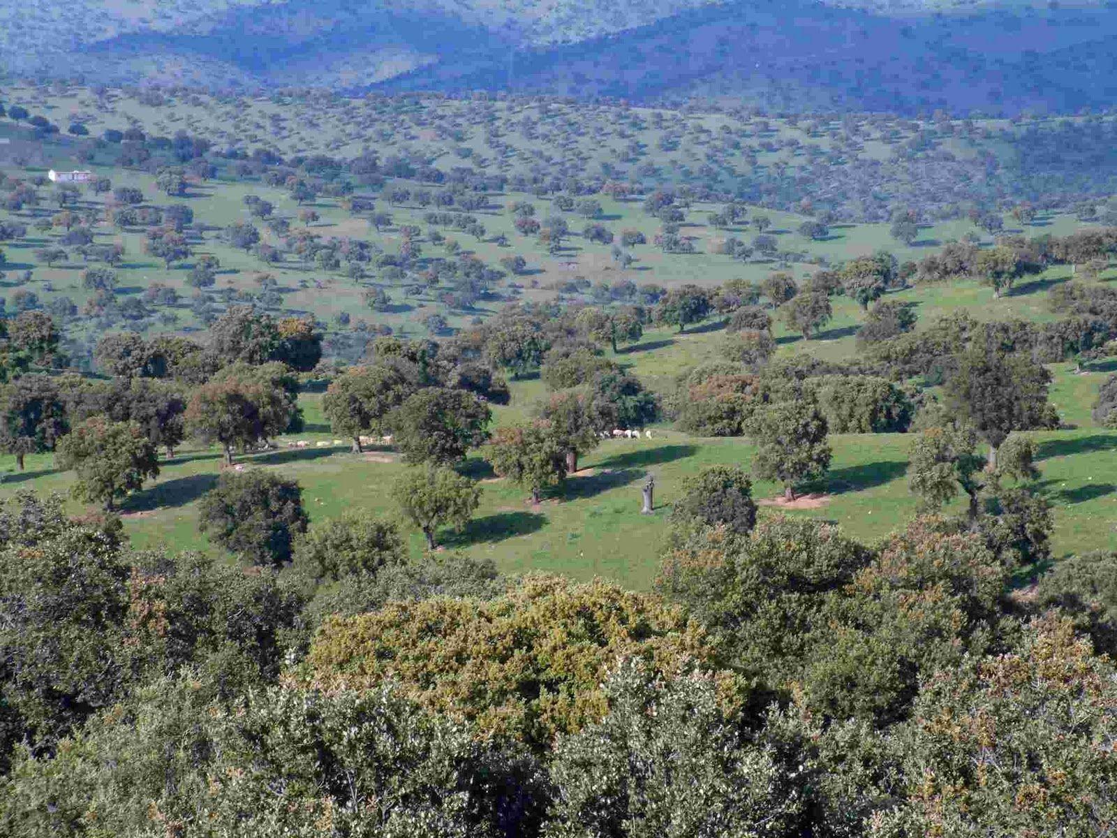 Regi n mediterr nea bosque perennifolio diversidad biogeogr fica espa ola - La mediterranea ...