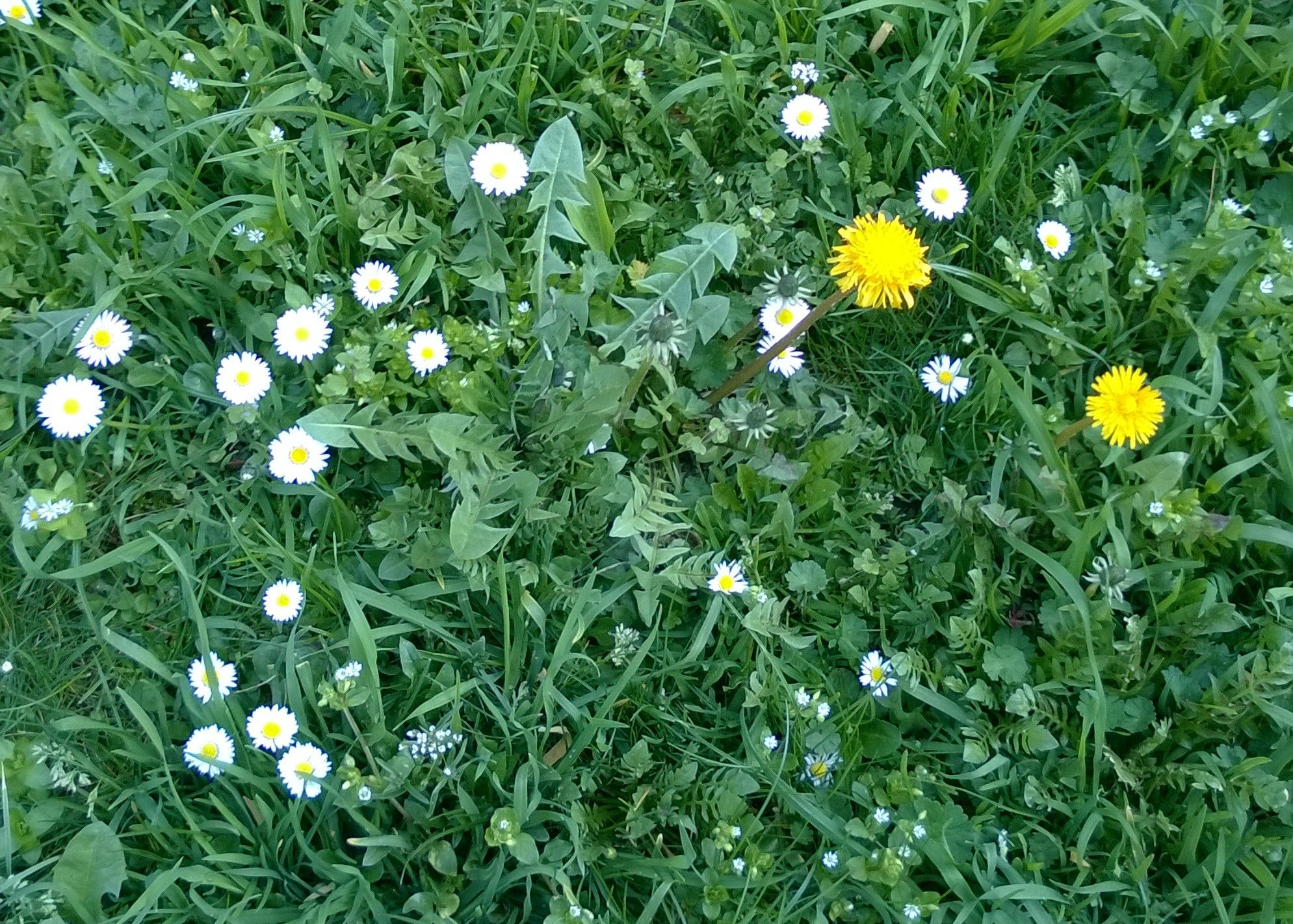 Tavaszi virágözön