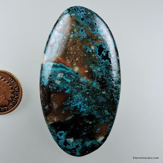 Chrysocolla with Fossil Crinoids 100% Natural Hand Cut Cabochon from 49erMinerals Stock# C1017, free U.S. shipping