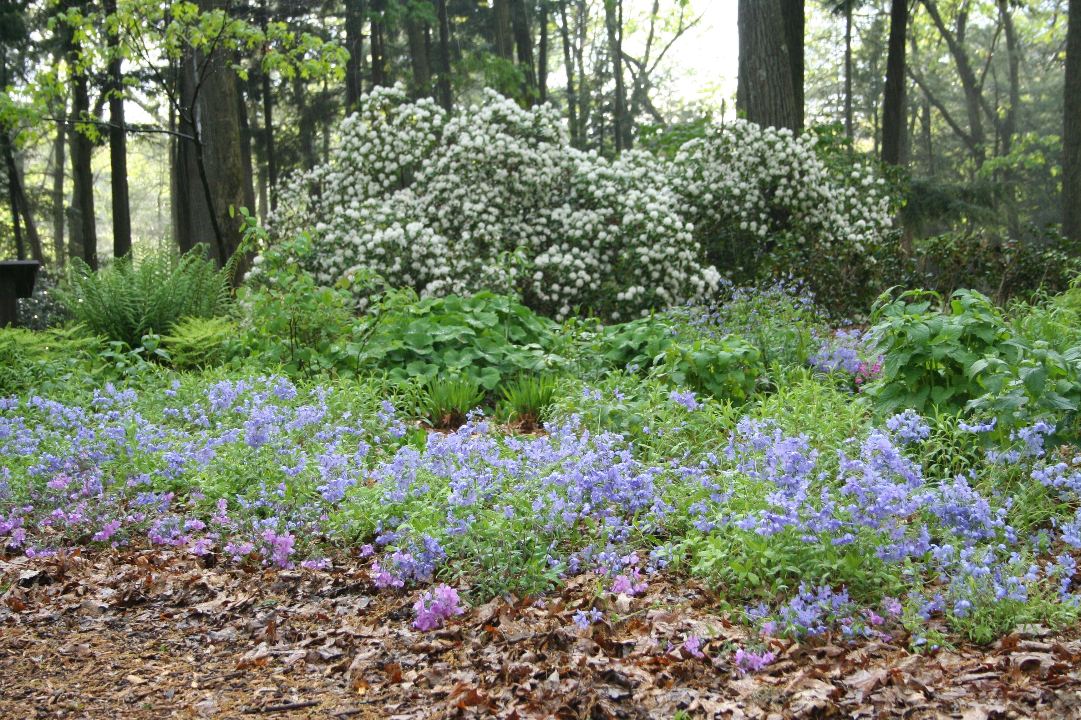 Ecological Landscaping New England Habitat Gardening