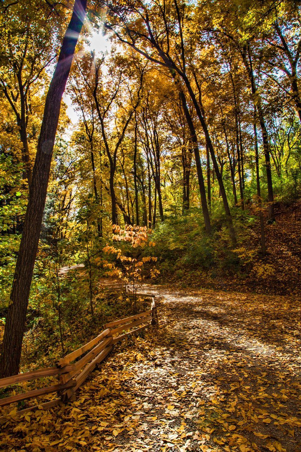 Autumn in Ann Arbor | America | Pinterest | Ann arbor, Arbors and Ann
