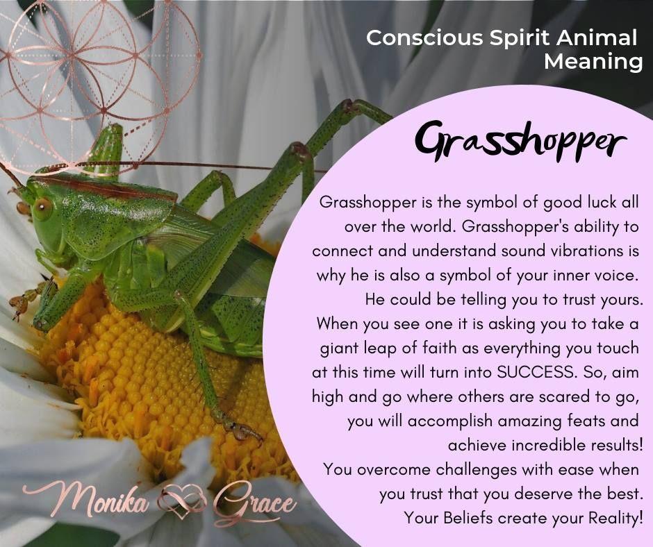 Spirit Animal Meaning The Lucky Grasshopper Spirit Animal Meaning Animal Meanings Grasshopper