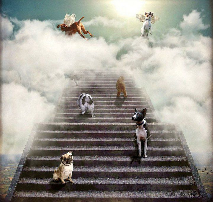 All Dogs Go To Heaven Dog Heaven Dog Love Baby Dogs