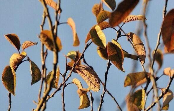 Find the bird !!!