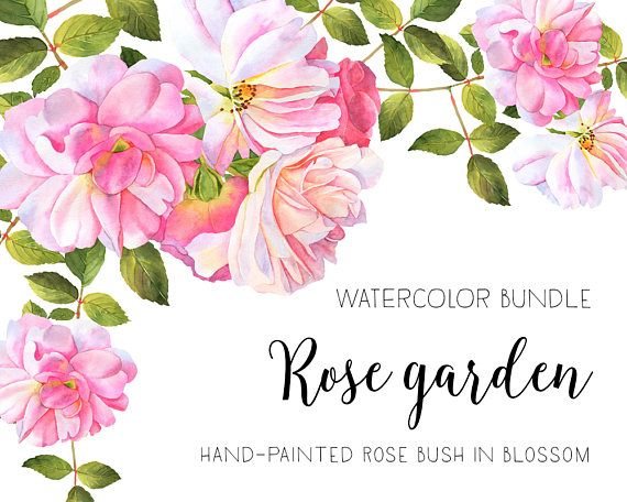 Roses Watercolor Clipart Flower Clipart Watercolor Roses