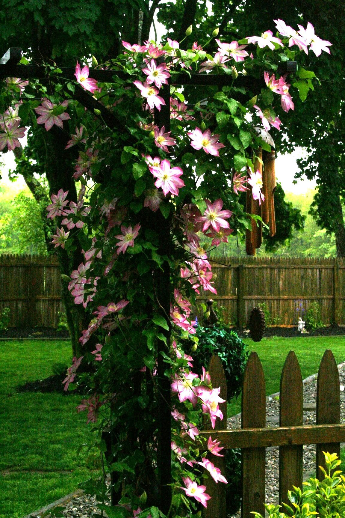Trellis beauty Trellis, World, Plants