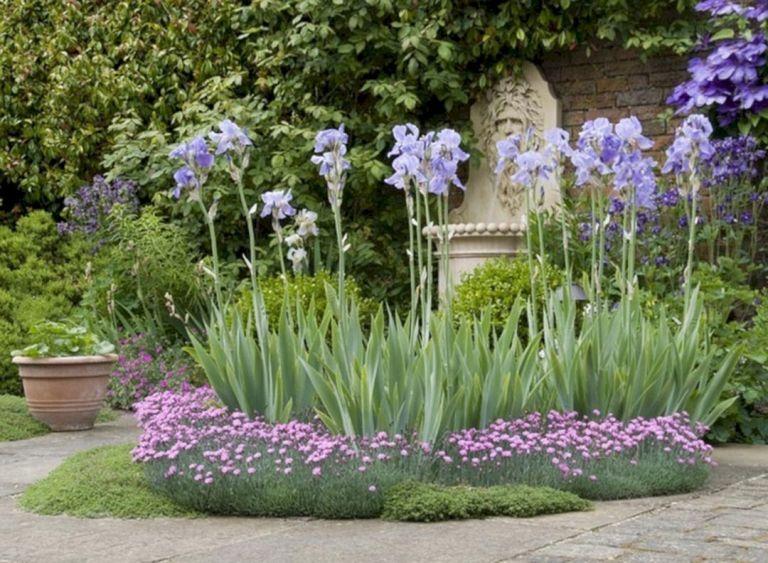 Beautiful Iris Garden Ideas 24 Iris Garden Iris Flowers Garden Garden Types