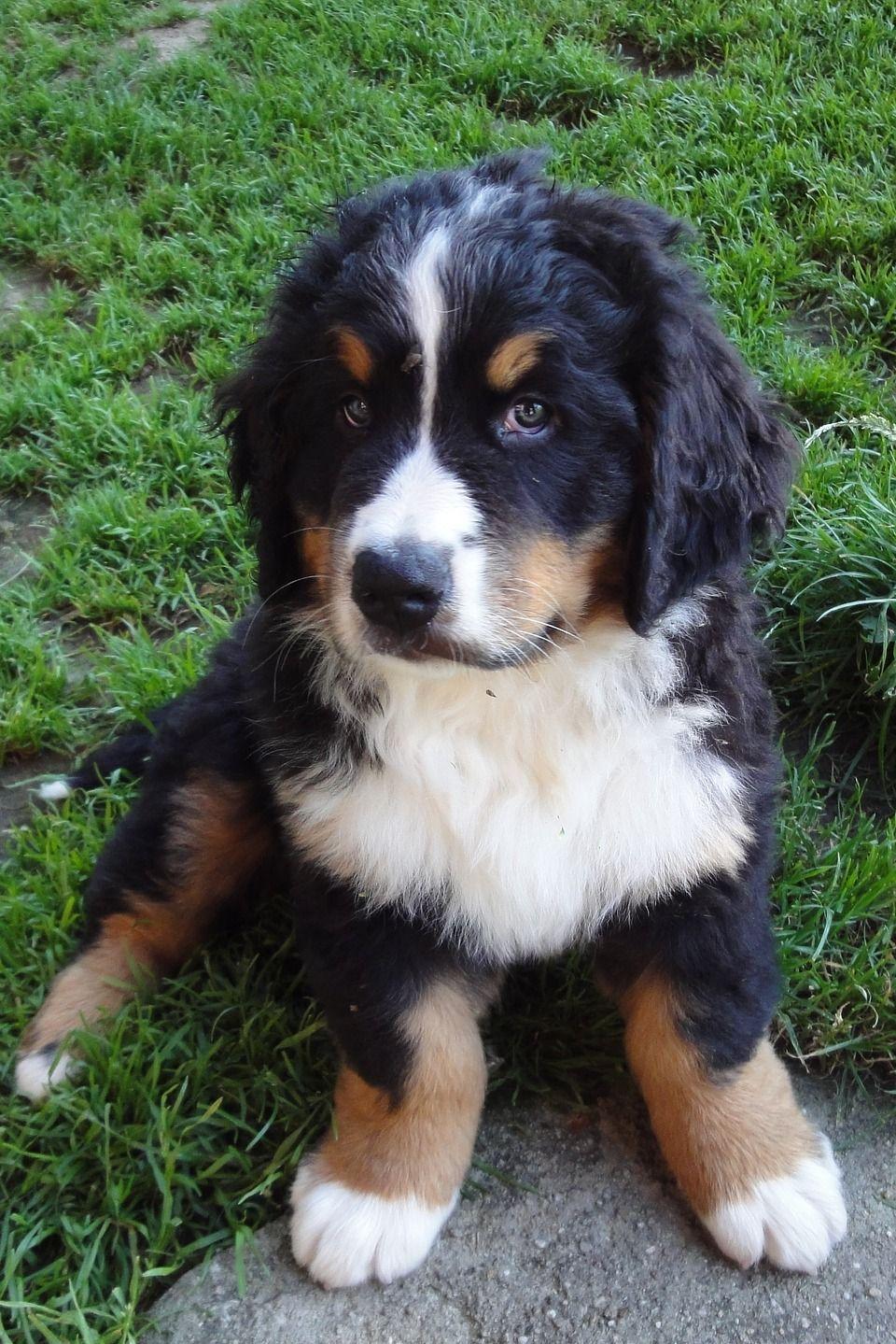 Malteser Hund Preis Schweiz