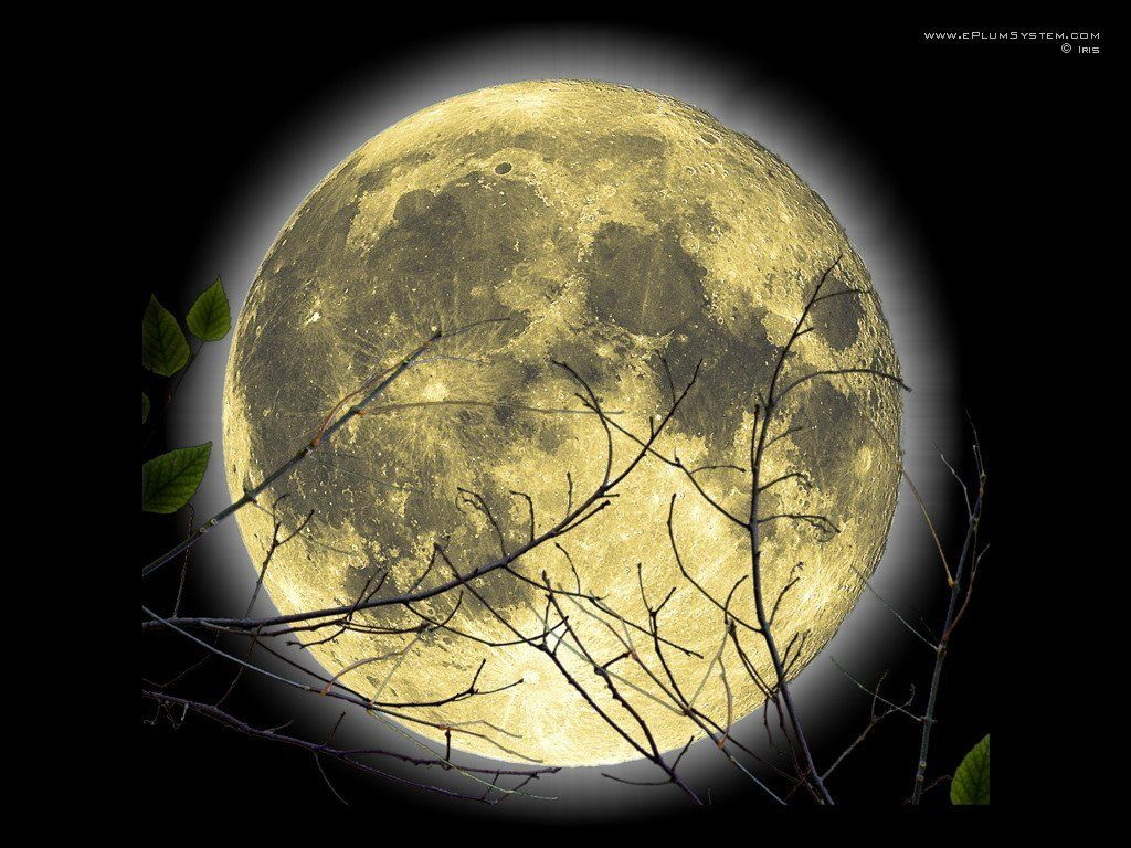 Full moon this is the extra cool cute witch full moon wallpaper full moon this is the extra cool cute witch full moon wallpaper background voltagebd Images