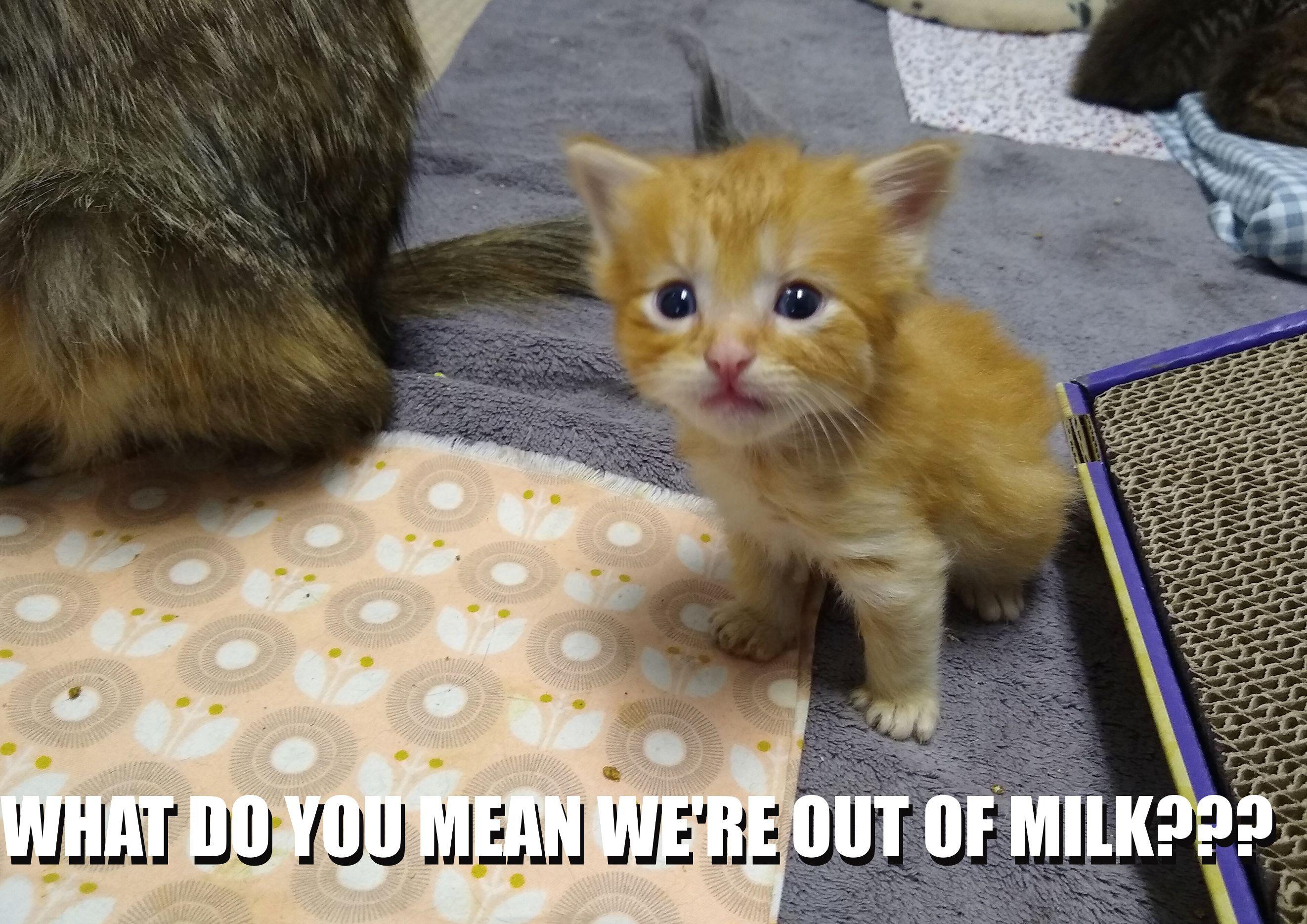 When Kittens Get Bad News Baby Cats Foster Kittens Kittens