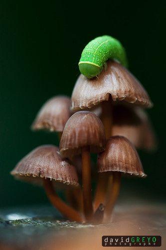 Die Raupe auf dem Pilz - ein bisschen wie im Märchen.