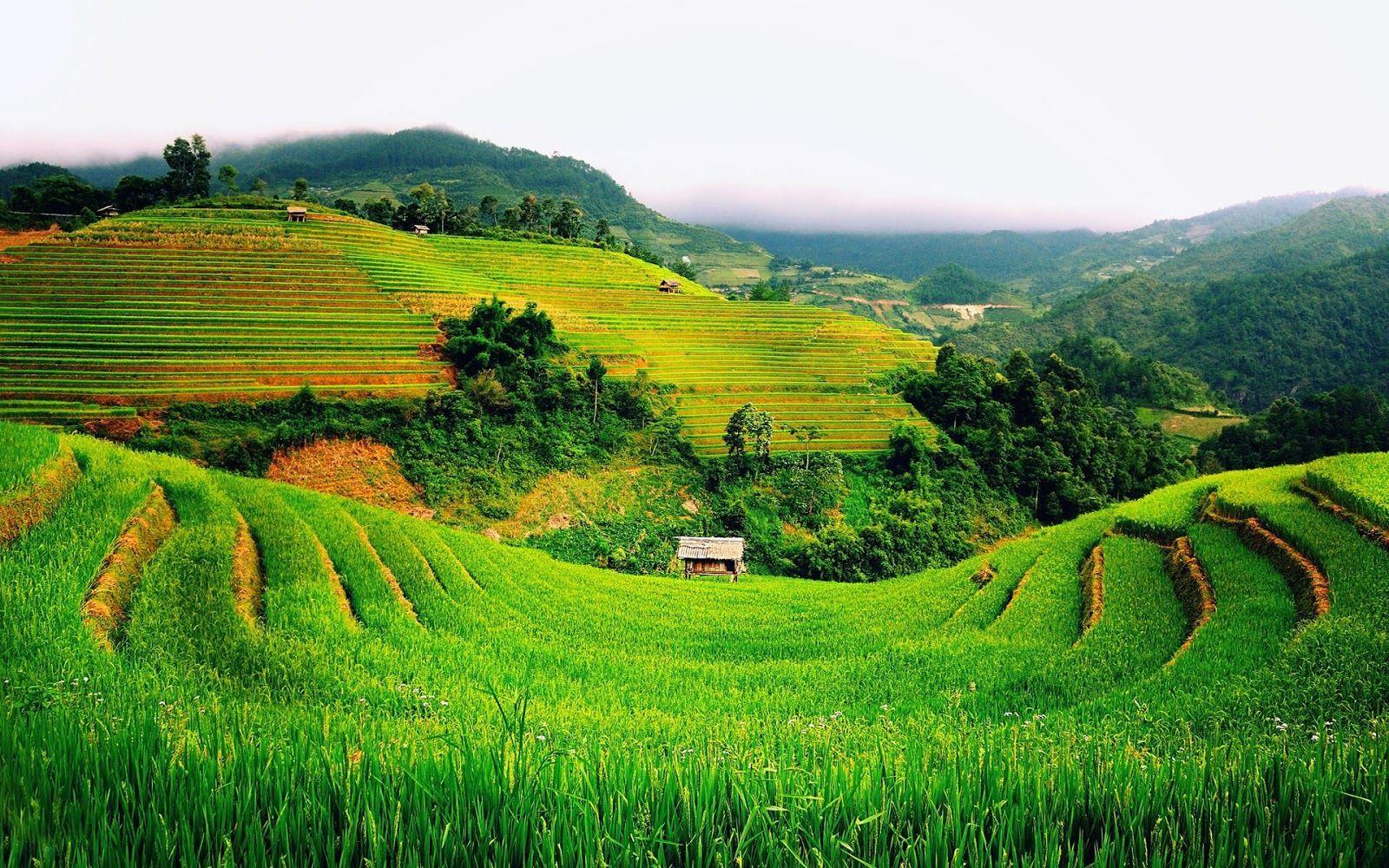 740 Gambar Pemandangan Sawah Full Hd Terbaik Beautiful Vietnam Scenery Landscape