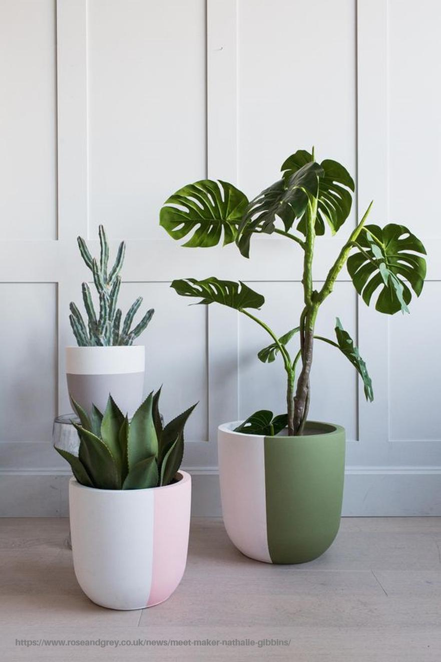 Beneficios De Una Planta 8 Ideas Para Tener Plantas En Tu Casa Dulce Elite Decoracion Plantas Plantas De Interior Ideas De Maceta